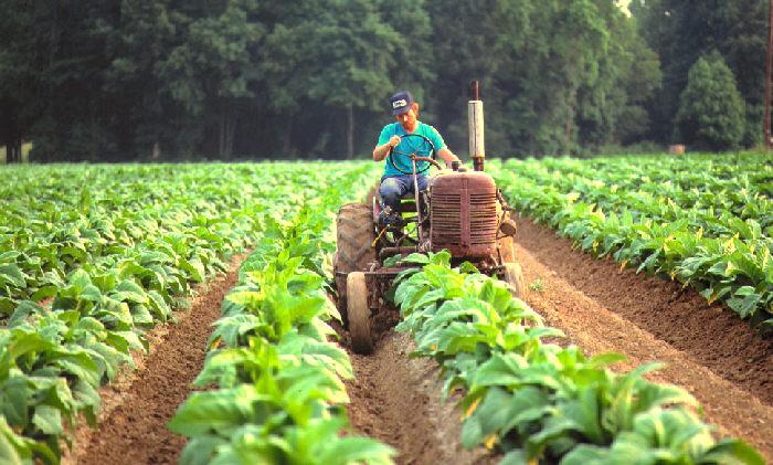 El ministerio del Agro y la Producción ayudó con la asistencia a los productores a través del Fondo de Crédito de Misiones - MisionesOnline