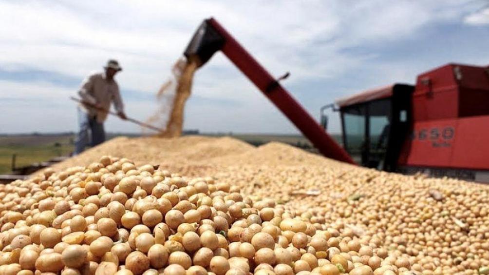 ? La Bolsa de Cereales sostuvo que la contribución del agro será récord en 2021 - El Economista