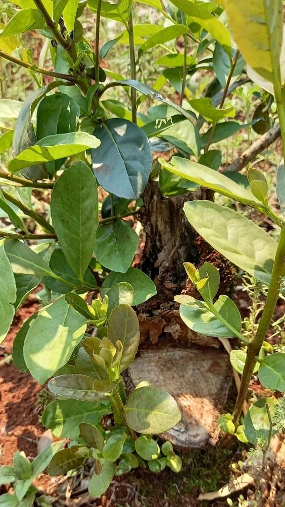 fertilizante orgánico